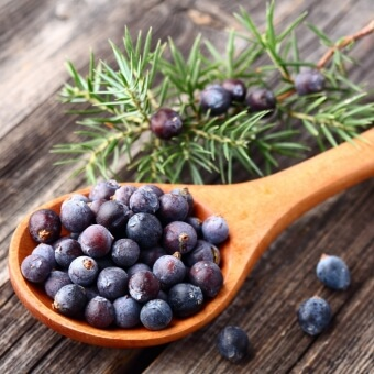 Image result for Juniper Berries: How To Find, Harvest, and Use Them
